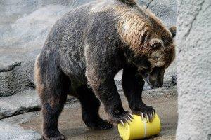 bear-cannister