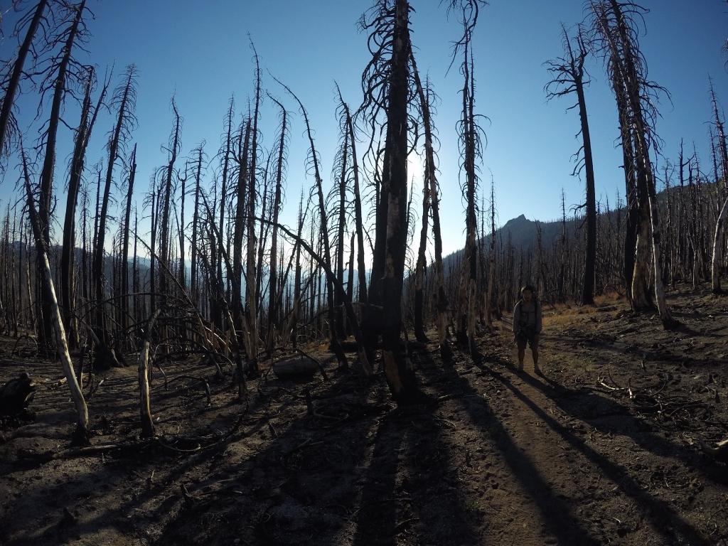 Opožarene šume su sablasne i nakon nekoliko sati hodanja uvelike utječu na raspoloženje