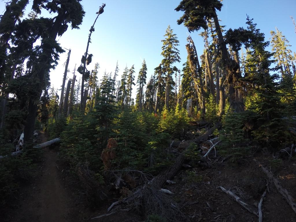 Oregonska džungla