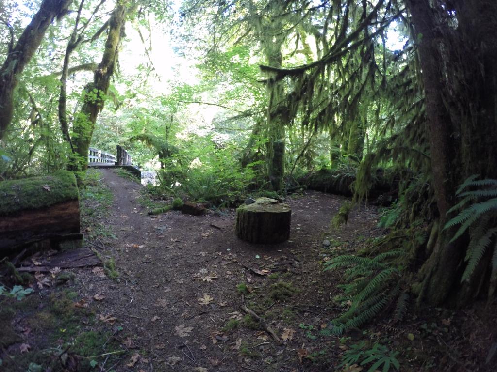 Šume Washingtona često podsjećaju na prašume i vidljivost kroz gustiš, mahovine i granje je vrlo malena. Fotografija to, nažalost, ne dočarava u punini.
