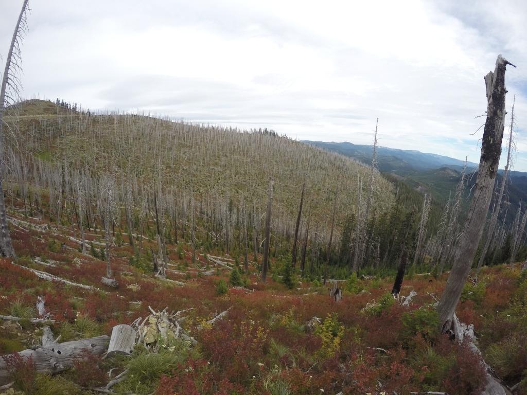 Opožarene šume u kombinaciji s oblacima često djeluju sablasno.