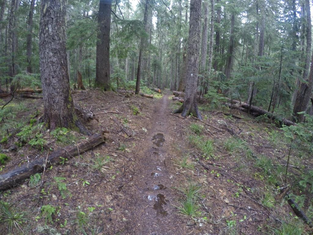 Šuma se polako natapala i postajala ogromna močvara.