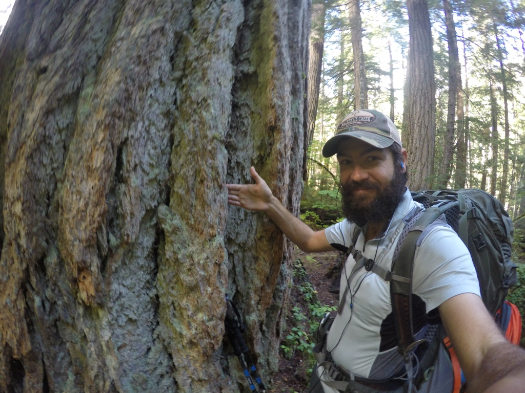 Ogromna stabla su obilježila ovaj dio puta.